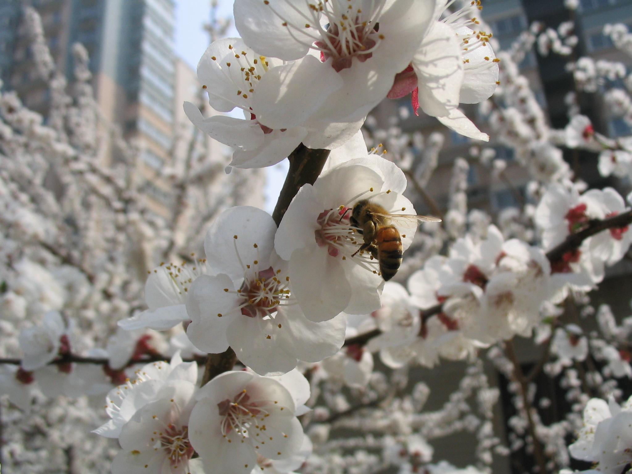 Beekeeping for Beginners Post